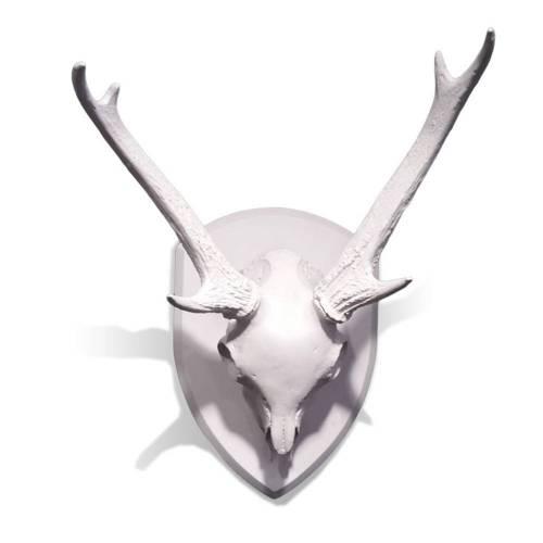 Mule Deer Skull with Antlers on Medallion