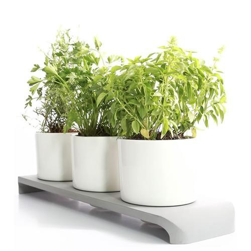 U-Herb Indoor Garden
