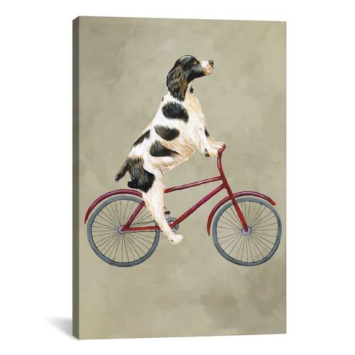 English Springer On Bicycle